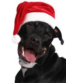 Super tipy na vánoční dárky pro psy