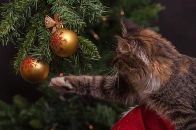 Super tipy na vánoční dárky pro kočky