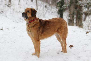 Zimní péče o psy