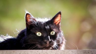 Kolik lidí má kočku z útulku?