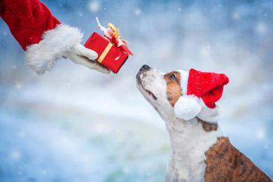 Charitativní vánoční sbírka: Přispějte na pejsky a kočky v útulcích!