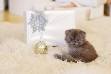 Charitativní vánoční sbírka: Přispějte na kočky a pejsky v útulcích!