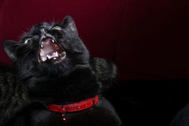 Bláznivý kočičí zákon