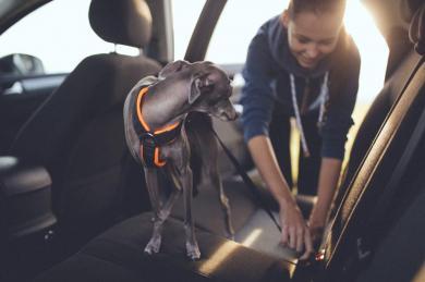 Jak bezpečně cestovat vautě se psem?