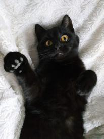 Proč černé kočky zůstávají v útulcích déle?