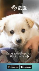 Nová sociální síť pro zvířata propojuje chovatele, pomůže útulkům i ztraceným psům