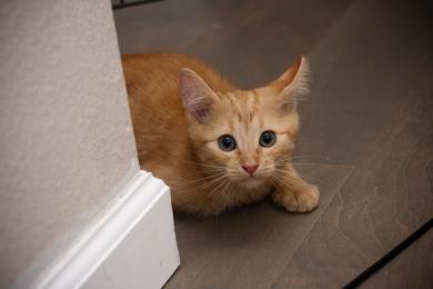 5 tipů, jak navázat vztah s plachou kočkou