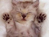 Vakcinace - očkování koťat a dospělých koček