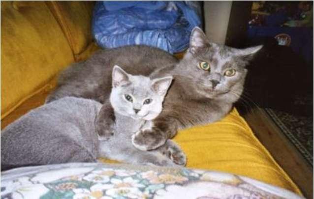 Největší kočička obrázky
