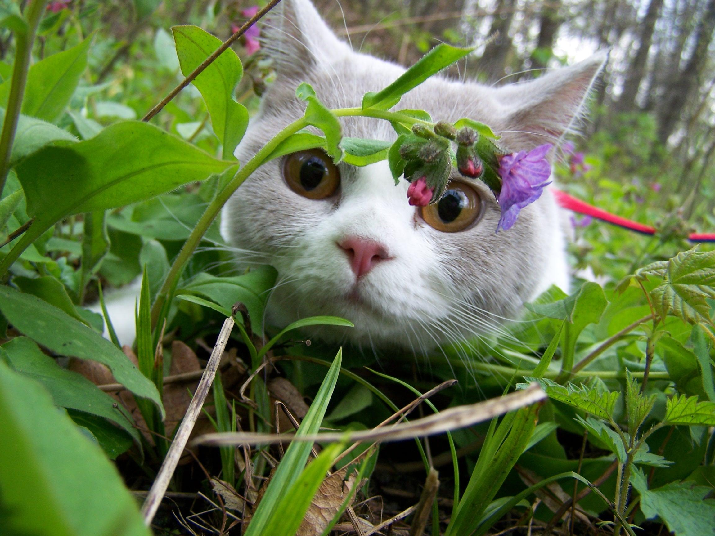 Nebezpečné rostliny pro kočku