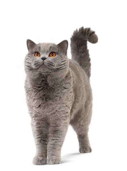 3 časté mýty o výživě psů a koček