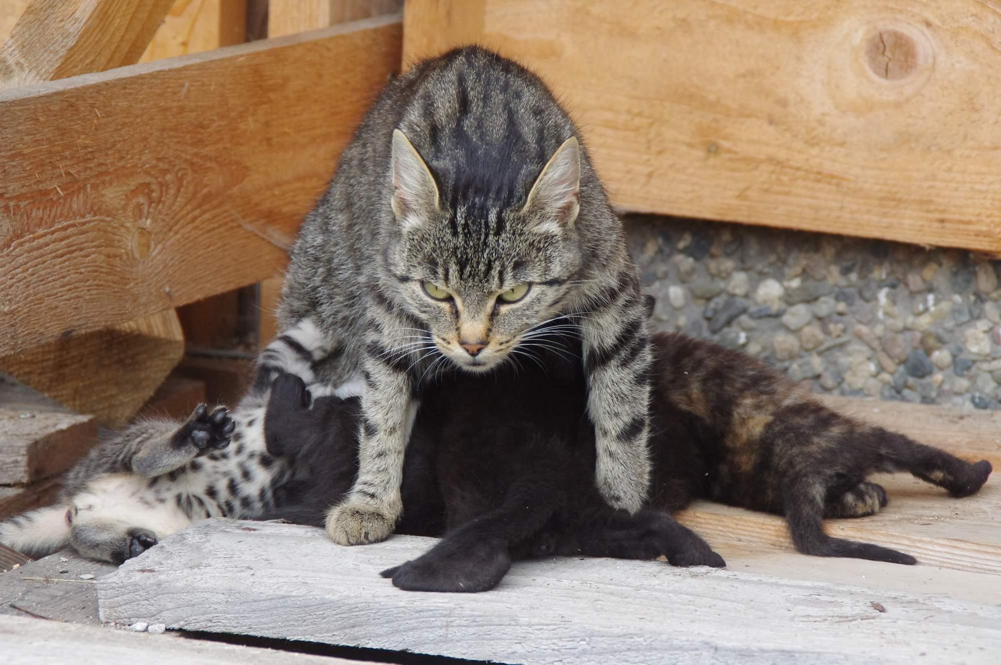 Jak rozeznat pohlaví koťat?