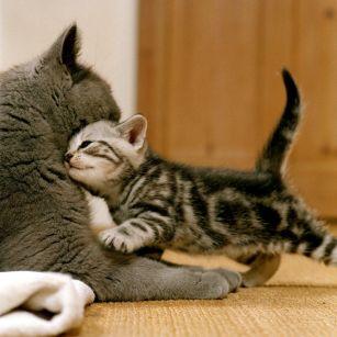 Co potřebují kočičí mimina?