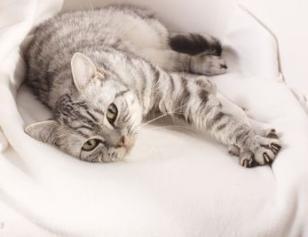 Podle kočičího gusta