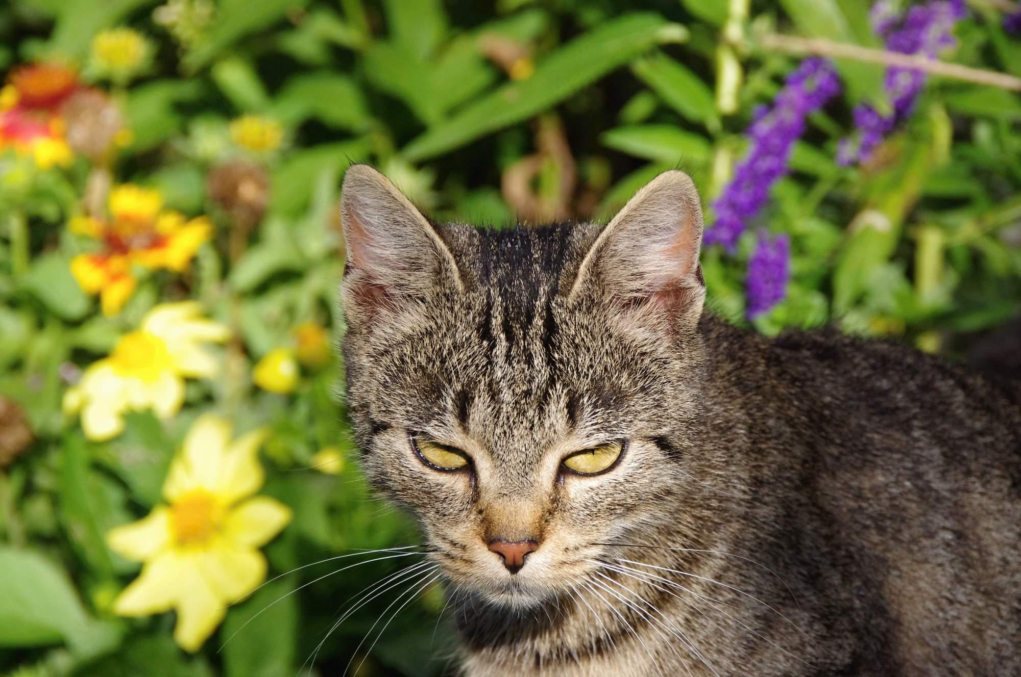 Potravní chování koček