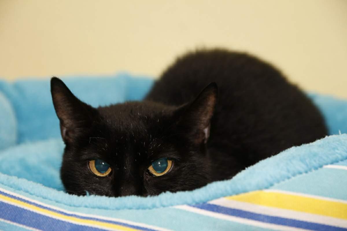 Extrémně černá kočička