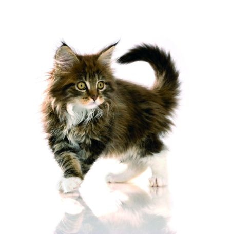 Dopřejte svému kotěti to nejlepší!