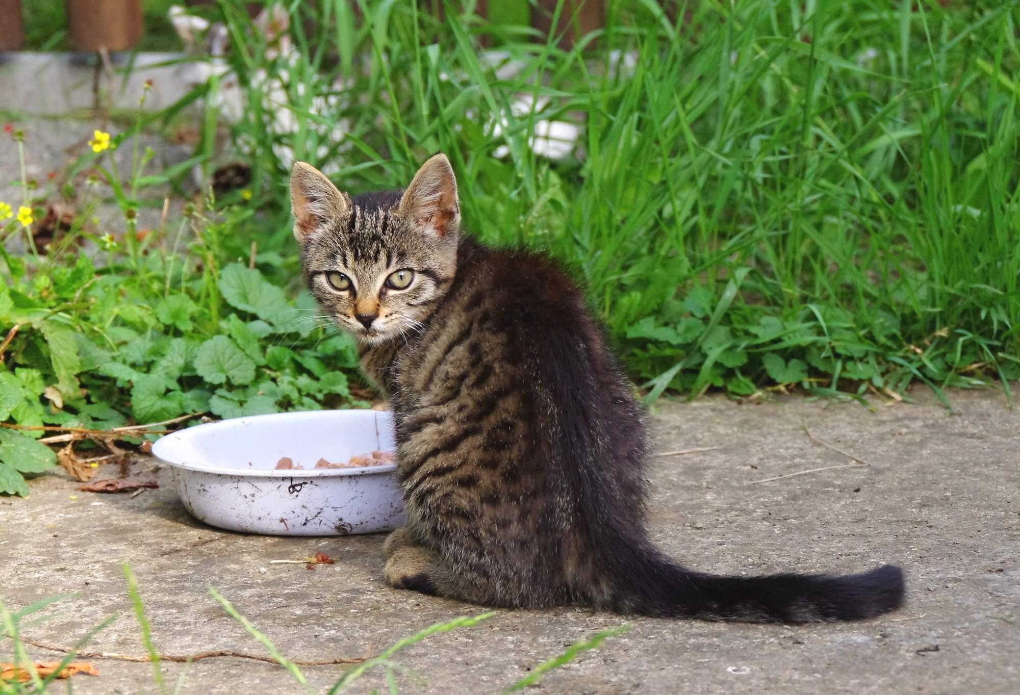 10 potravin, které kočce nikdy nedávejte