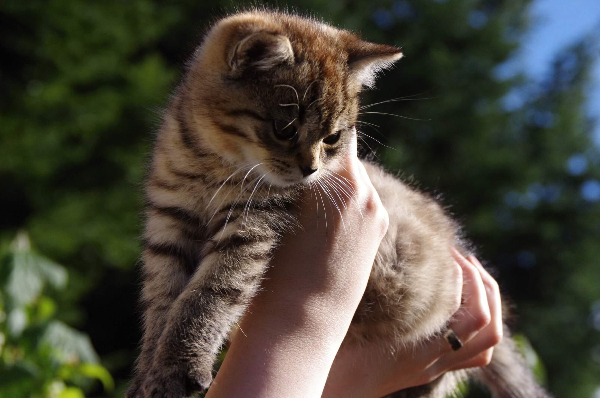 Vymazlené koťátko