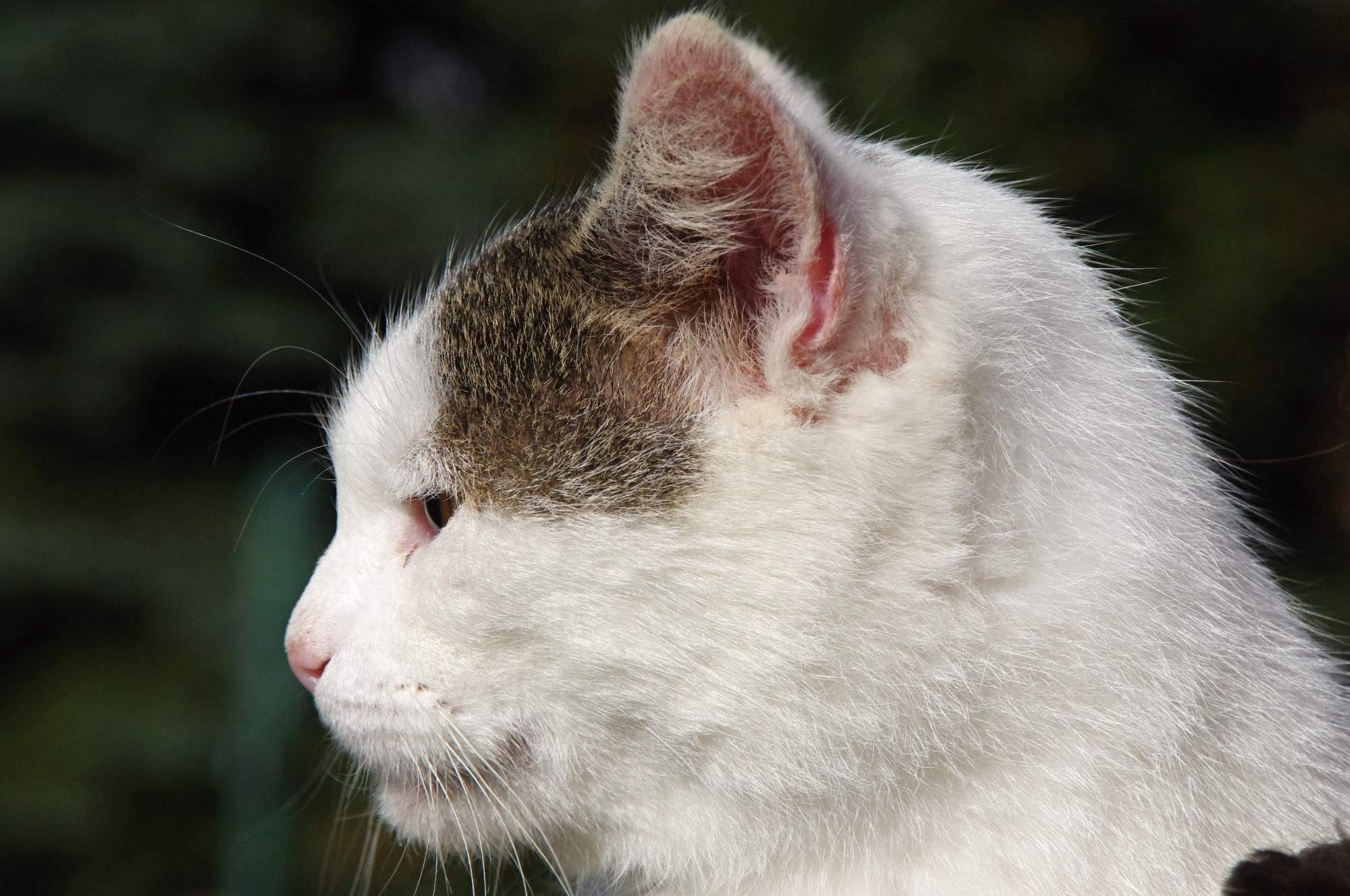 Kočka na vodítku