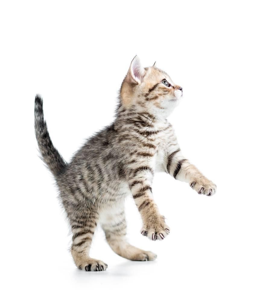 Tip pro kočičí pohodu