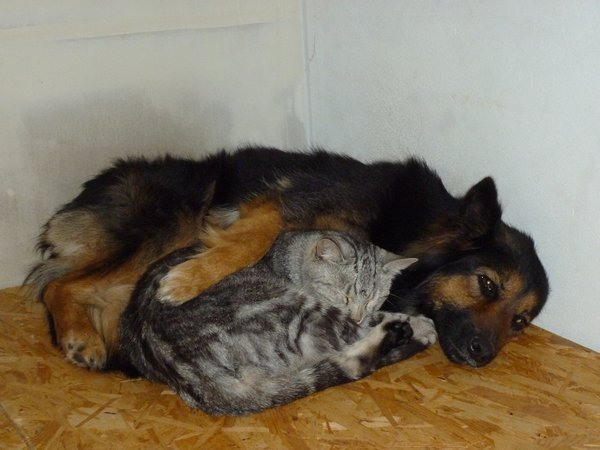 Pozor na antiparazitika, kočka není malý pes