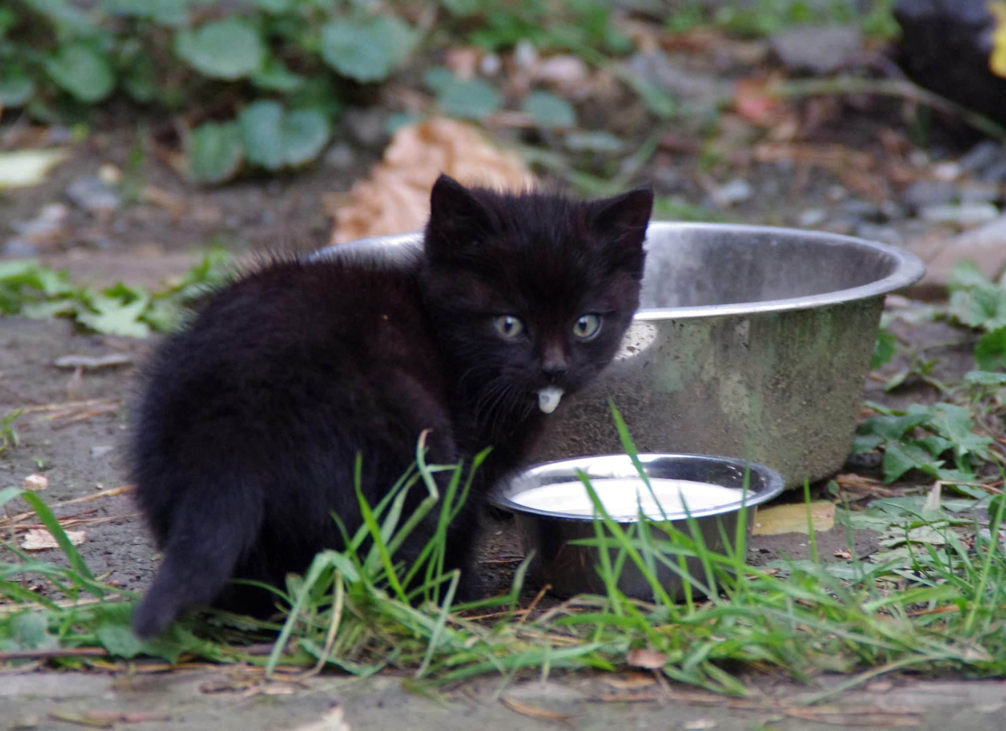 Mlsný kočičí čich