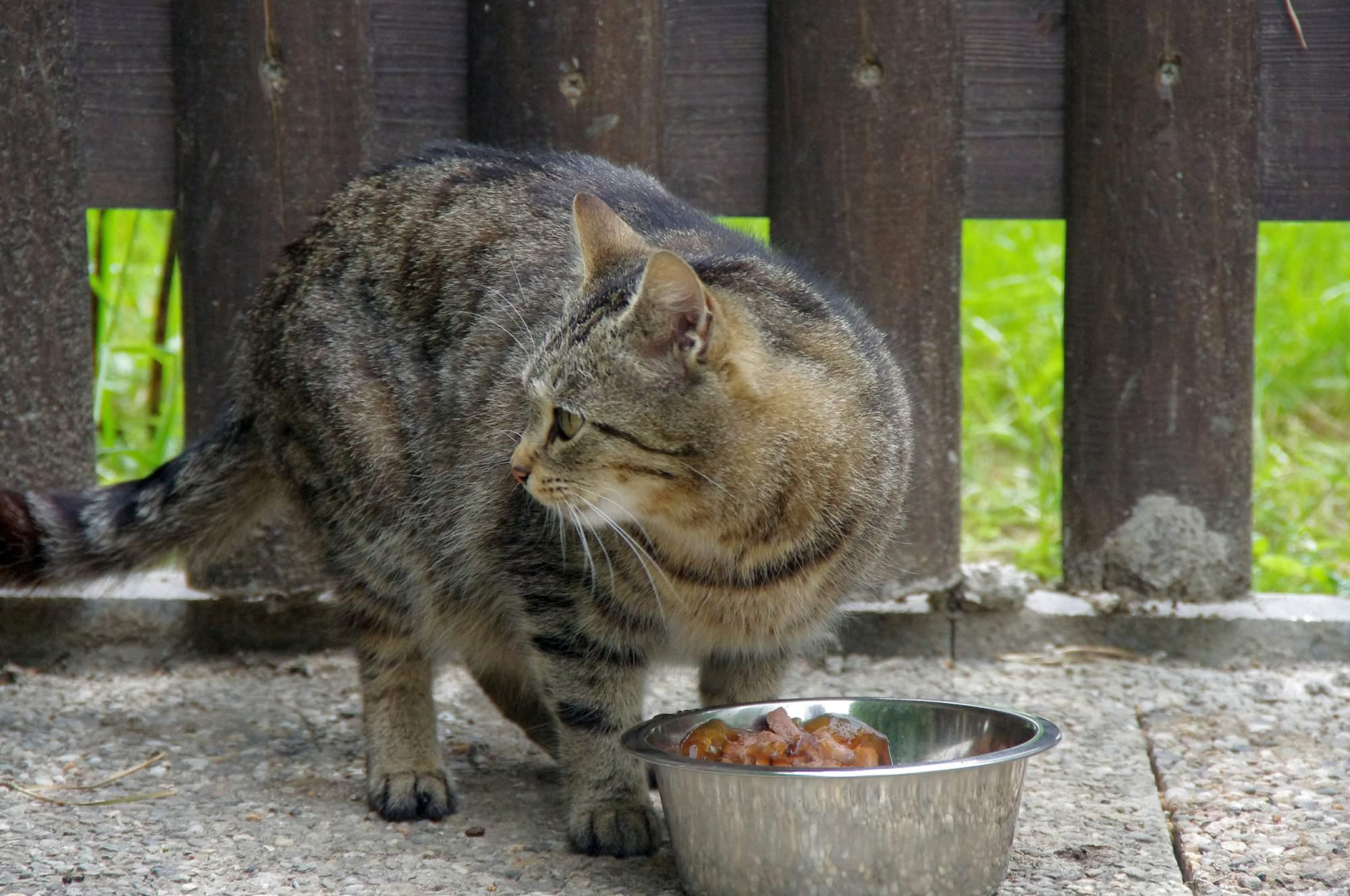 Vitamin A a kočky