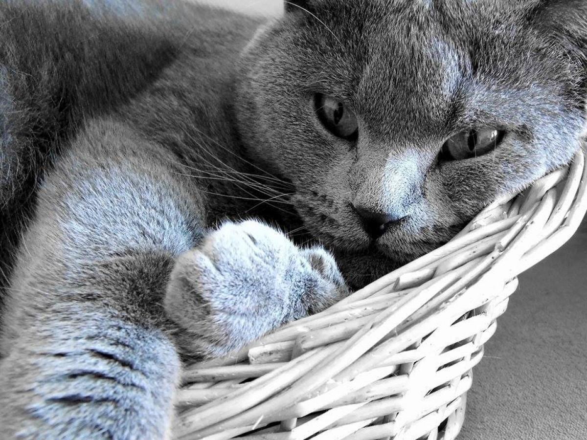 15 znaků zdravé kočky