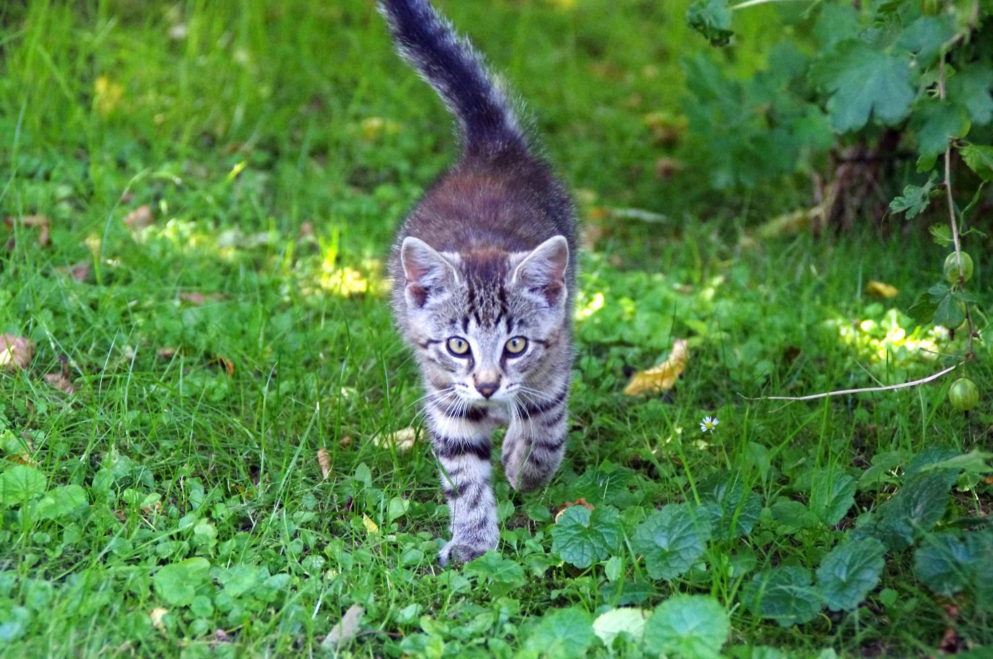 Jaro se blíží, nejvyšší čas začít kočku chránit před parazity!