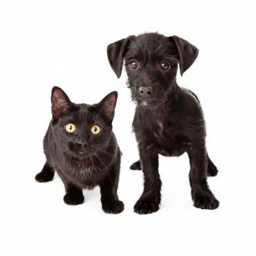 FOR PETS: jedinečný veletrh pro domácí mazlíčky a jejich majitele