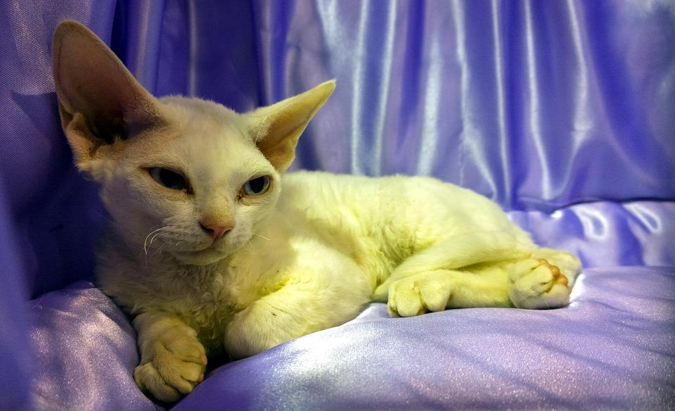 Pozvánka: Mezinárodní výstava koček INTERFELIS, 24. 6.–25.6. 2017