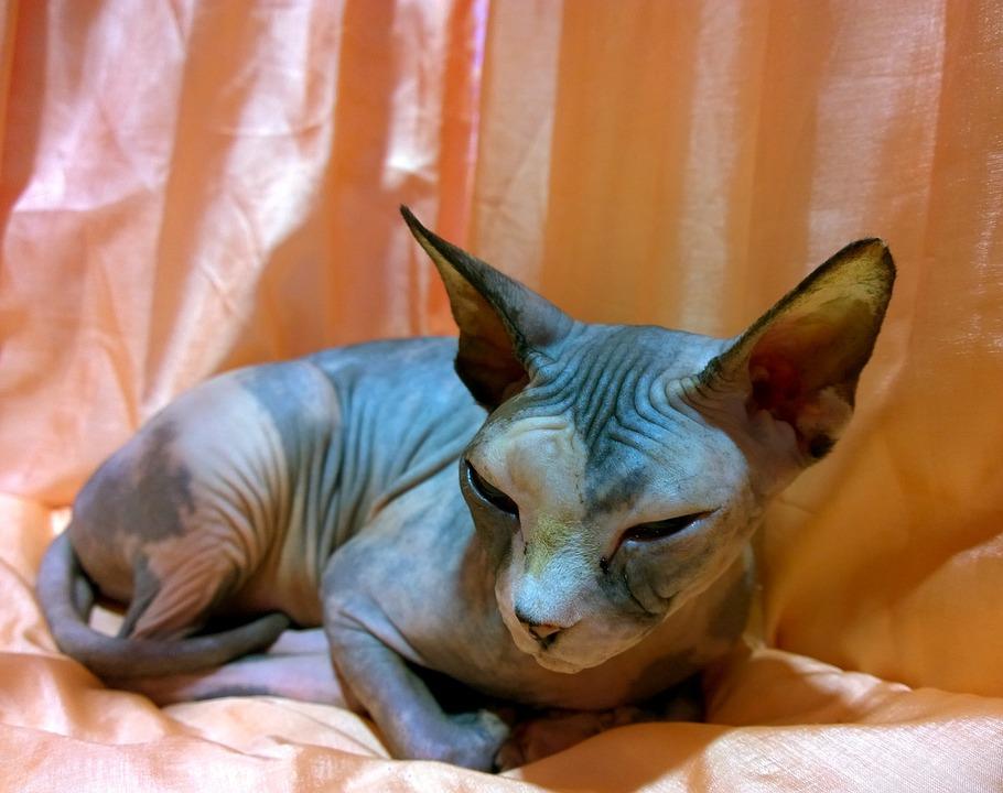 Pozvánka na mezinárodní výstavu koček 26.8. - 27.8.2017 v Ostravě