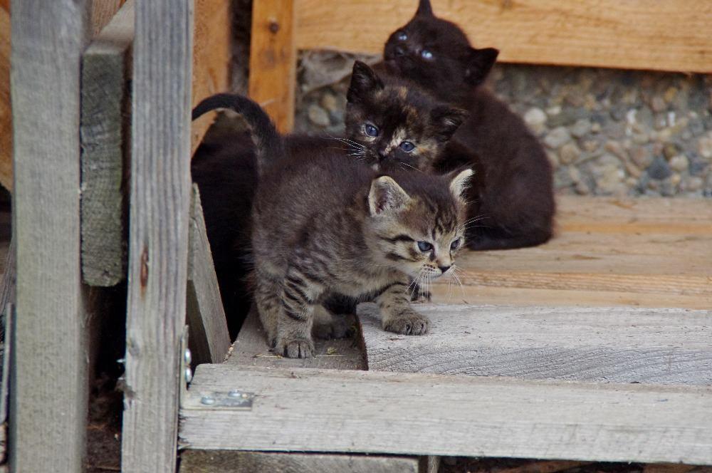 Krásná koťata hledají nový domov