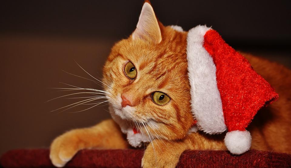 10 tipů na vánoční dárky pro kočky