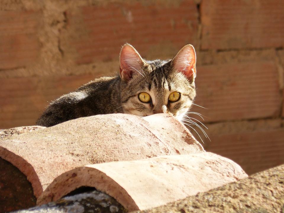 7 rad, co dělat, když se vám ztratí kočka