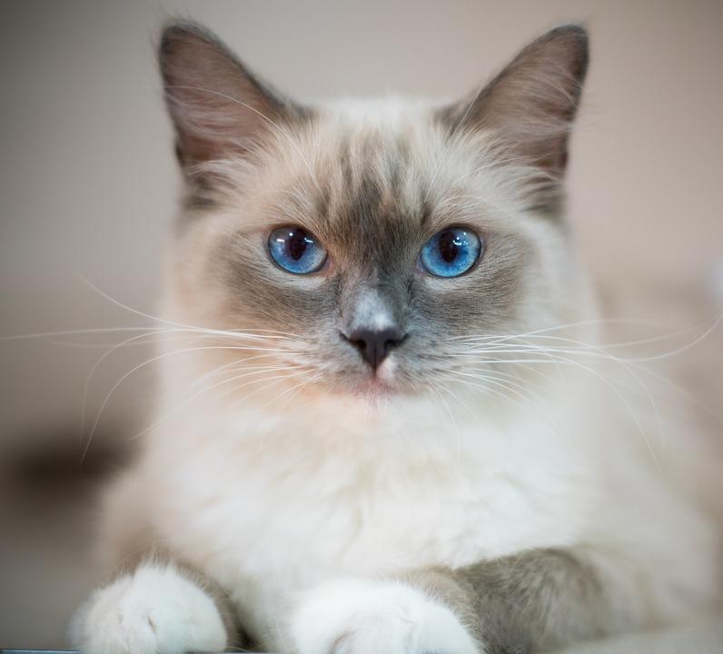 Kočičí komunikace pro začátečníky