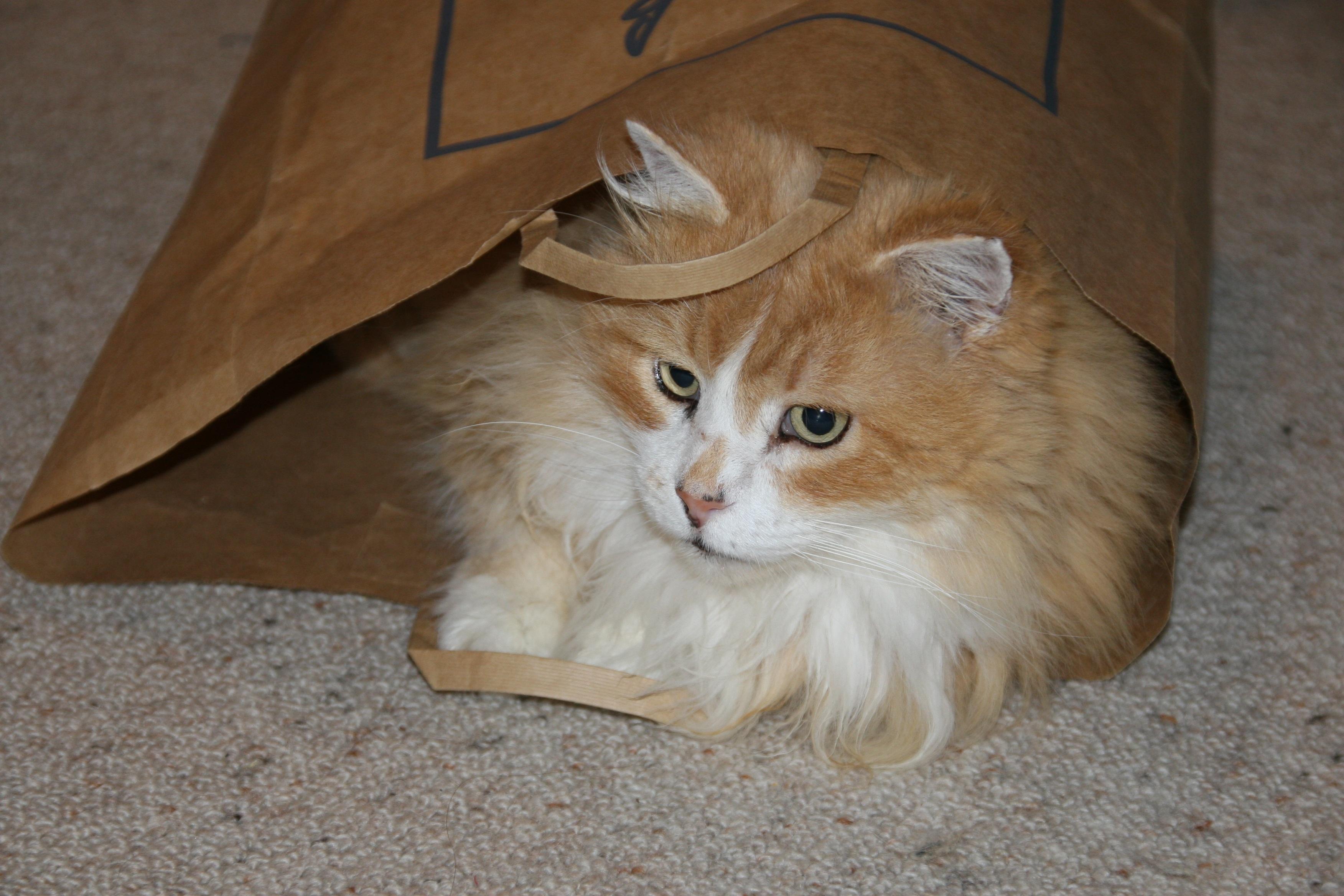 6 důkazů, že papírové tašky a kočky prostě patří k sobě