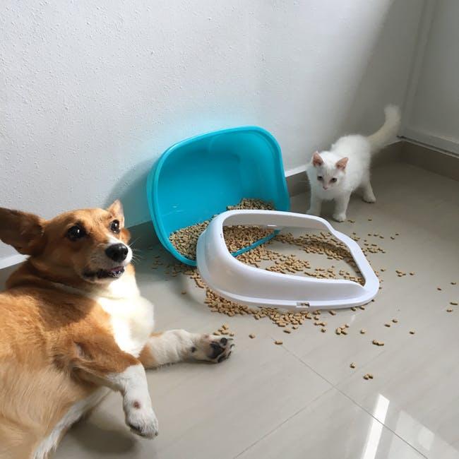 Kolik kočičích záchodů?