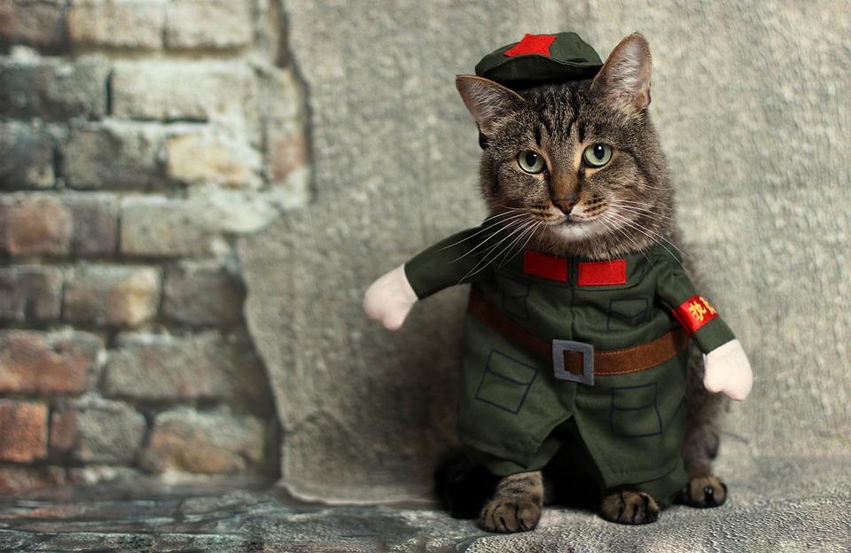 Kočky v kostýmech