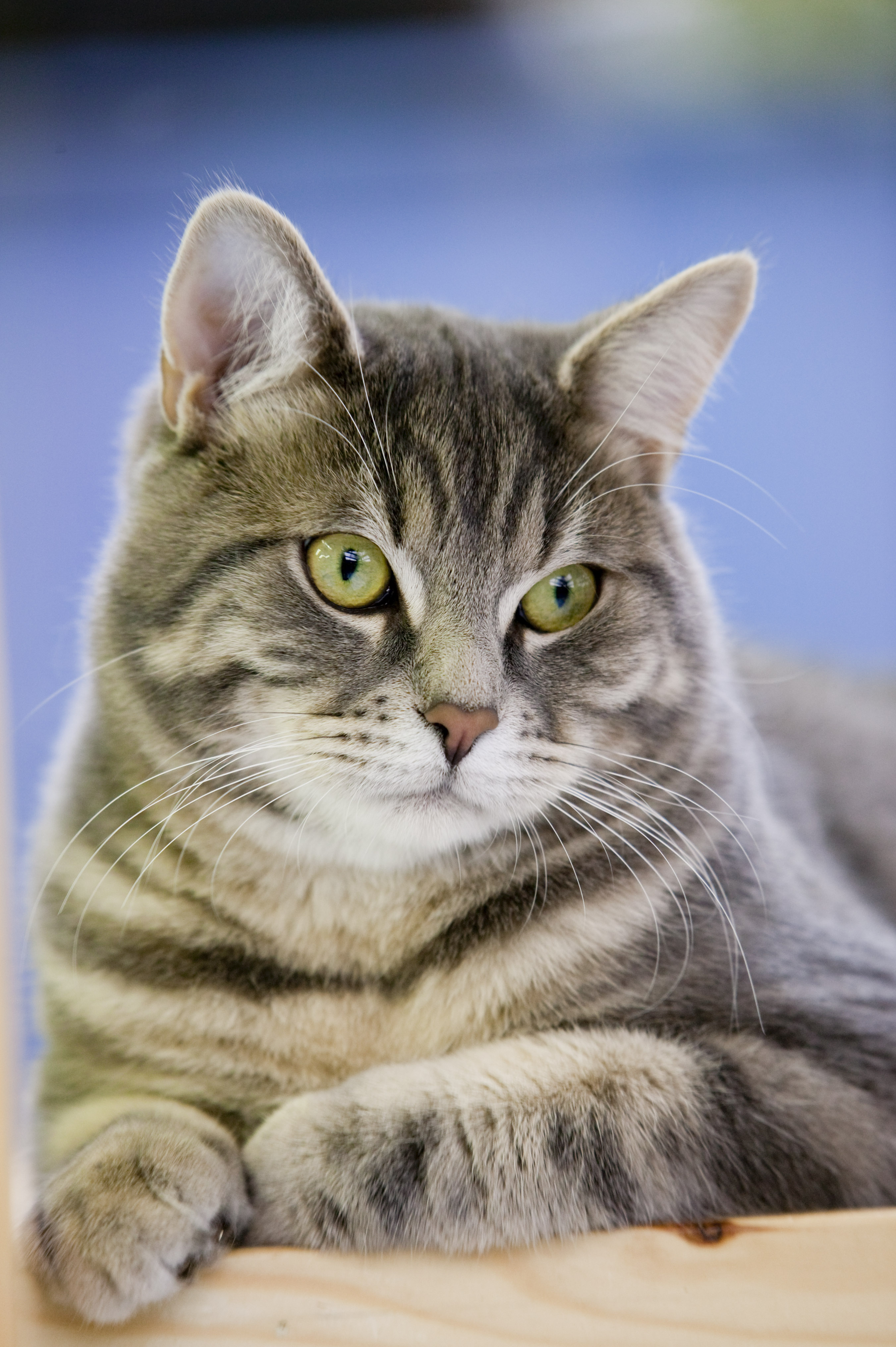 7 důležitých poznatků o výživě koček