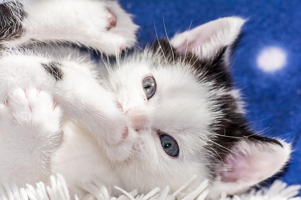 10 nejběžnějších zdravotních problémů u koček