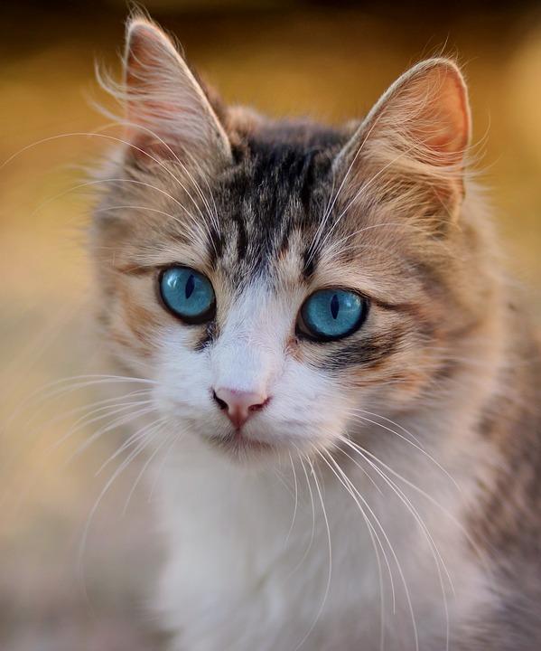 Pláčou kočky?