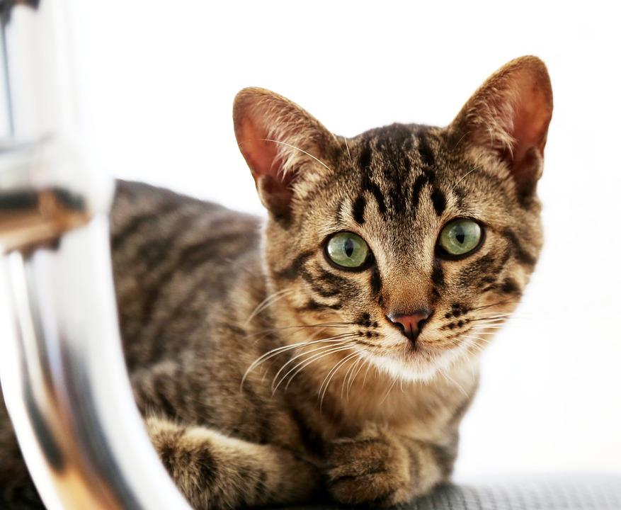 Průzkum na téma zdraví koček
