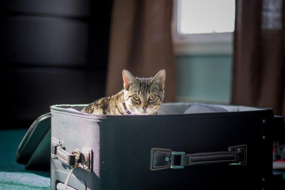 Cestování letadlem s kočkou