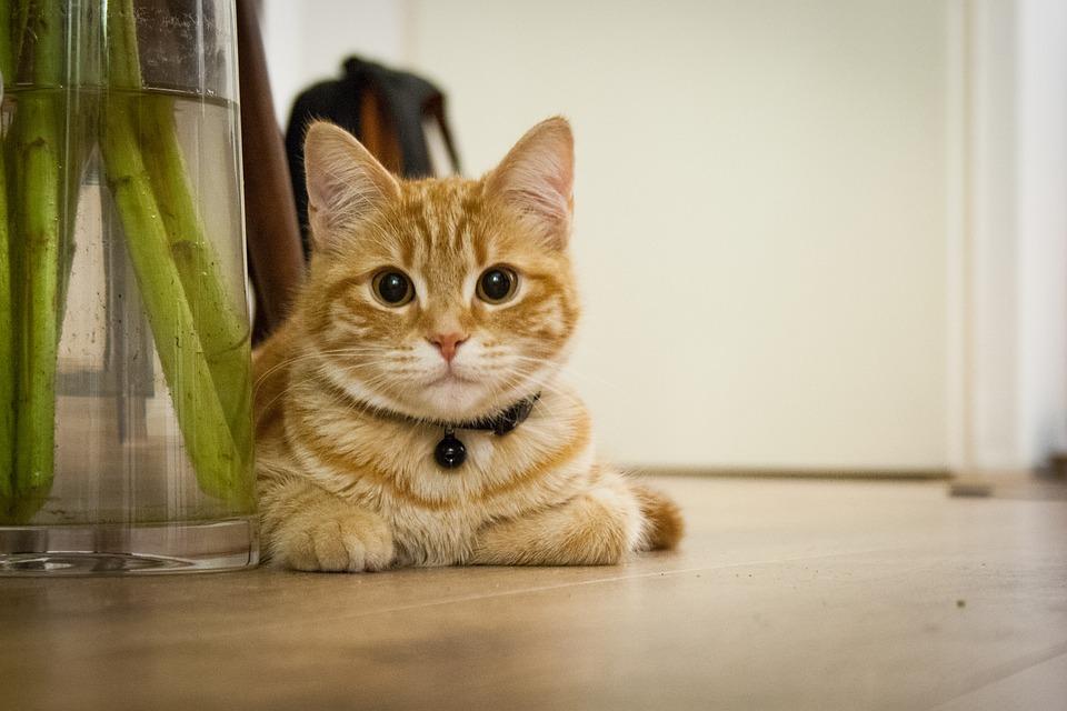 Průzkum: Pro kolik lidí je domácí mazlíček nejoblíbenějším členem domácnosti?