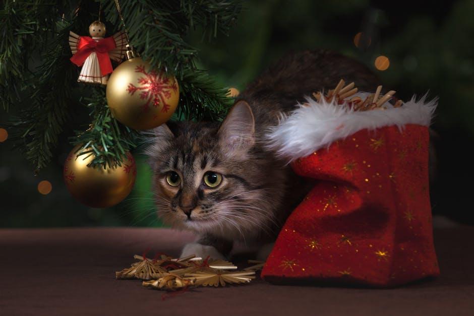 12 super tipů, jak o Vánocích udělat kočkám radost
