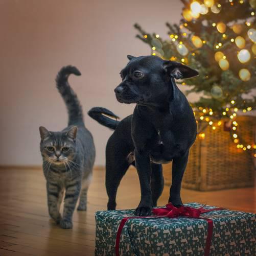 Vánoce a Silvestr sdomácími mazlíčky