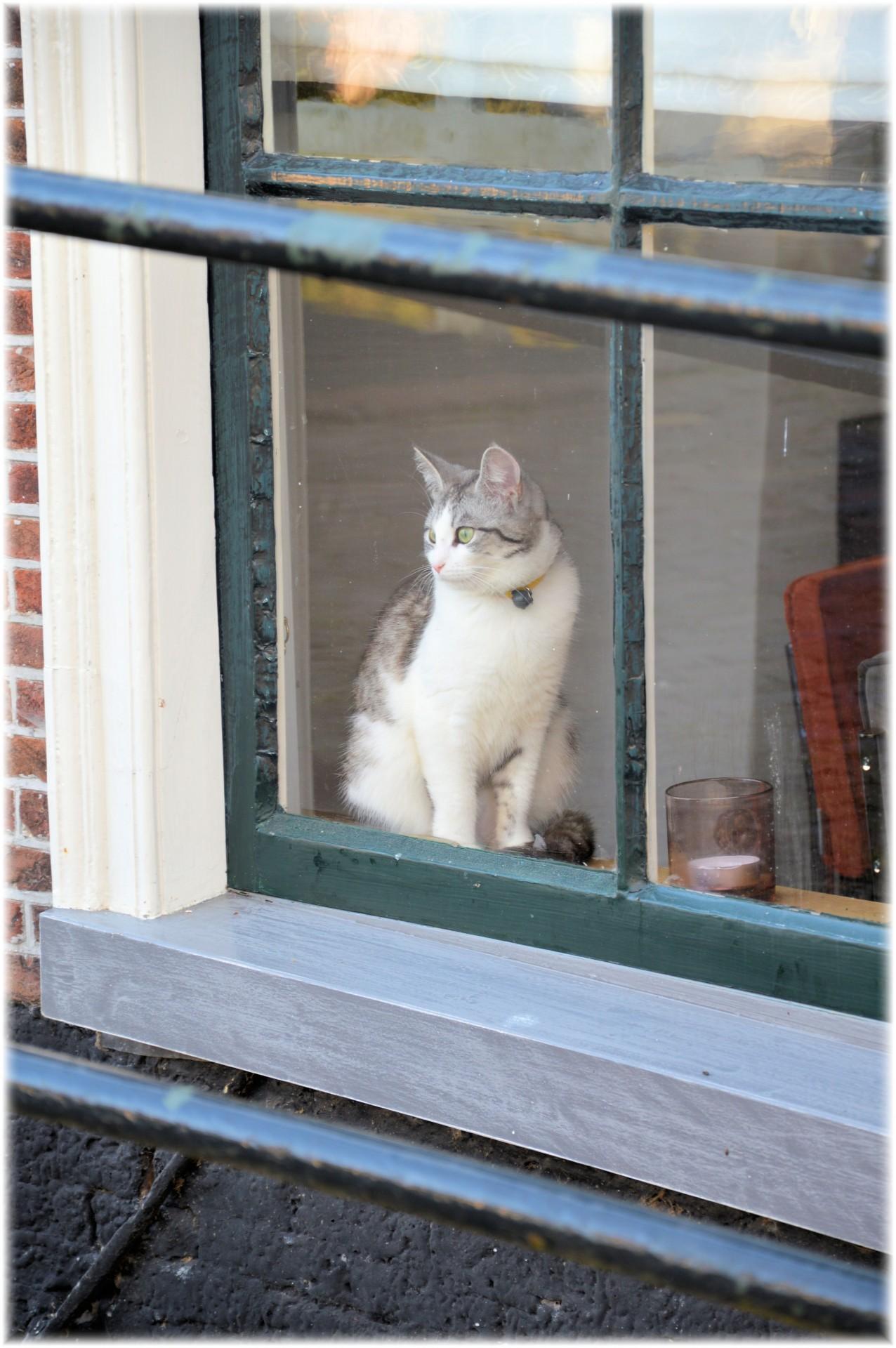 Proč kočky vydávají zvláštní zvuky, když vidí ptáky za oknem?