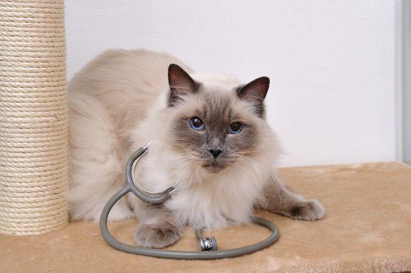 10 nejčastějších onemocnění u koček